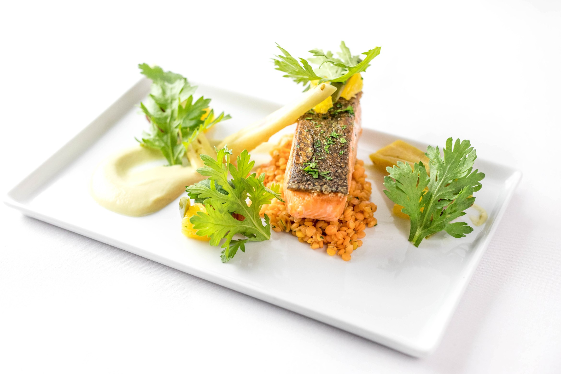 rectangle white dish with red lentils and a slice of cooked salmon aribella photography food pictures